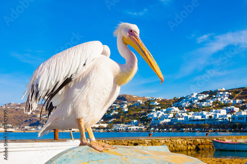 Staande foto Athene Famous Pelican Petros in Mykonos island Greece Cyclades
