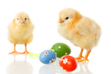 Fototapety baby chicken and easter eggs on white