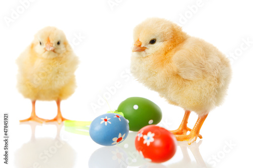 baby chicken and easter eggs on white