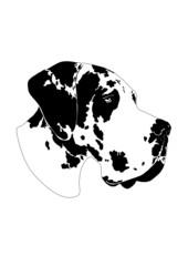 Deutsche Dogge gefleckt- Portrait