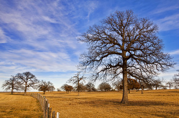 Texas winter sky over scenic trees on the pasture