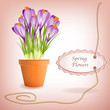 Garden flower pot with spring crocuses and label for text
