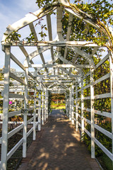 White Wood Trellis in Rose Garden
