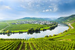 famous Moselle Sinuosity with vineyards - 47865944