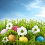 Fototapety Easter colorful eggs in green grass with flowers on meadow