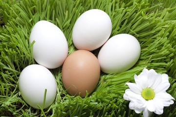 Easter organic eggs in the green grass
