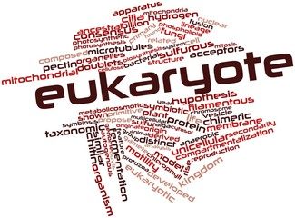 Word cloud for Eukaryote