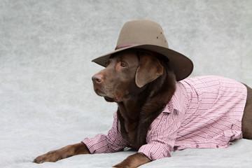 Labrador mit Cowboyhut und Karohemd