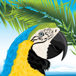 Parrot and palm branches