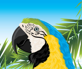 Parrot among palm branches