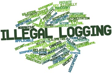 Word cloud for Illegal logging