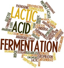 Word cloud for Lactic acid fermentation