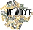 Word cloud for Melanocyte