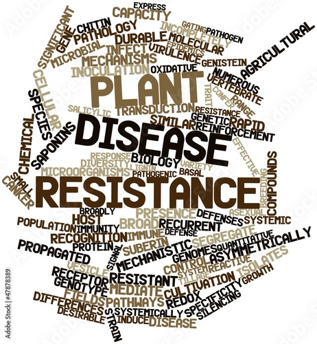 Word cloud for Plant disease resistance