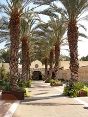 Израиль. Пальмовая аллея на территории Йорденита