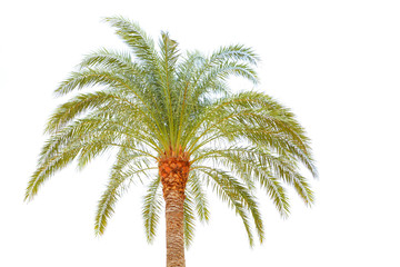 Beautiful palm tree in natural outdoors