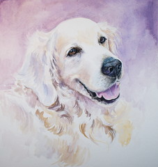 Golden retriever-watercolors.