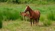 Pferd vid 03