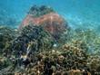 Beautiful coral reef full of small fish