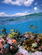 Split view with sky and beautiful coral reef underwater