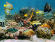Underwater scenery with colorful sea life