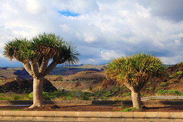 Sub tropical trees against an arid landscape
