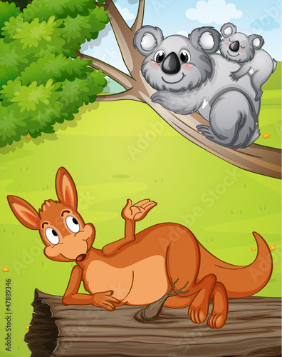 A kangaroo and koalas