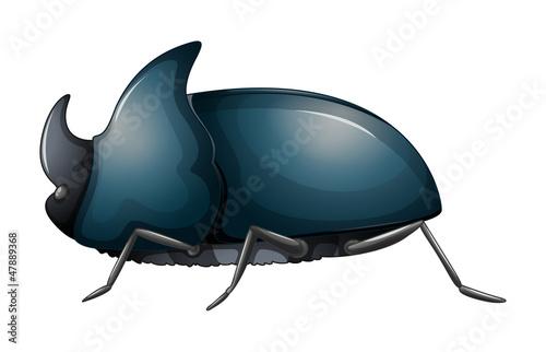 A rhinoceros beetle