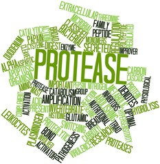 Word cloud for Protease