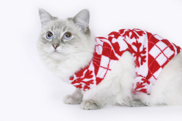 Winter ragdoll