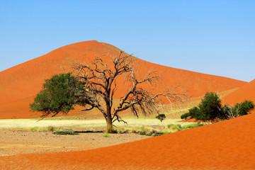 Dune du Désert de Namib