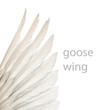 Natural white goose wings. Isolation.