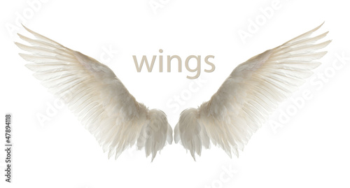 canvas print picture Natural white goose wings. Isolation.