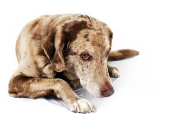 Cute but shy dog