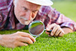 Close up of senior gardener cutting grass 2