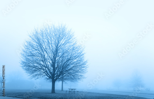 Foggy winter scene and trees