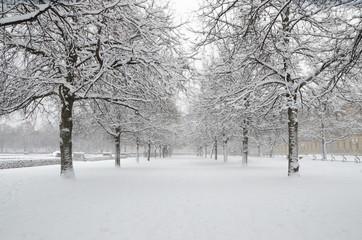 Английский сад зимой