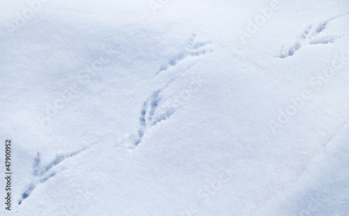 Detailed bird traces in fresh snow