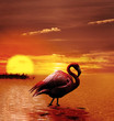 Sunset With Flamingo