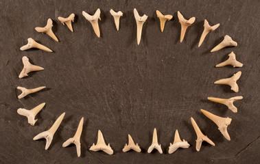 fossile Haifischzähne II