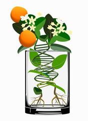 transgenic plants concept