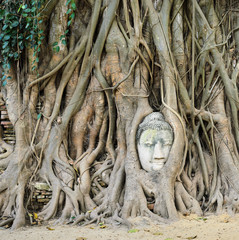 Head of Buddha in a tree trunk, Wat Mahathat, Ayutthaya,Thailand