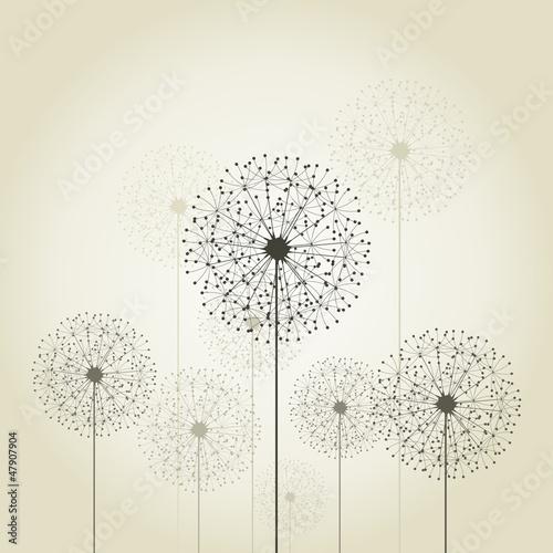 Fototapety, obrazy : Flower a dandelion