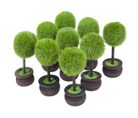 Group of Potted Trees