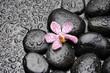 Wet zen pebble with Pink orchid .Selective focus
