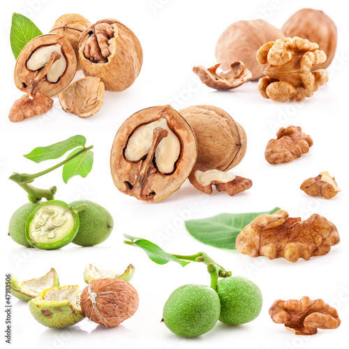 Collections of Walnuts isolated on white background, closeup