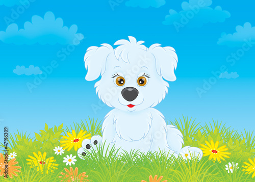White pup sitting on grass among wildflowers