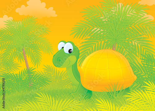 turtle walking in a tropical forest
