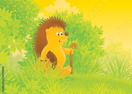 Hedgehog mushroomer