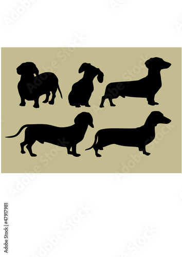 silhouette of the dogs - 47917981